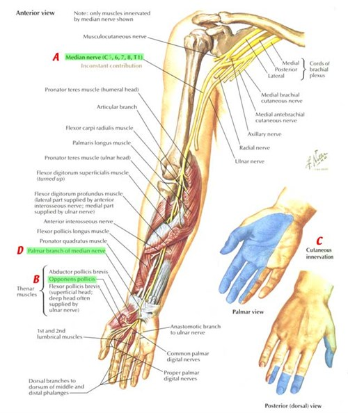 Got Any Arm Issues Carpal Tunnel Tennis Elbow Adelaide Advanced